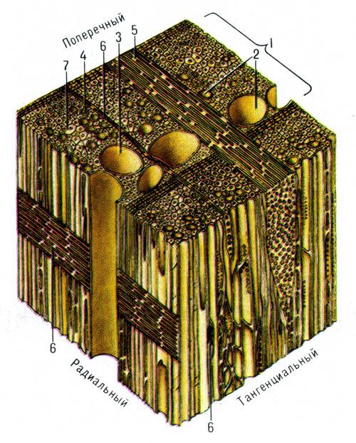 Микроскопическое строенние лиственных пород