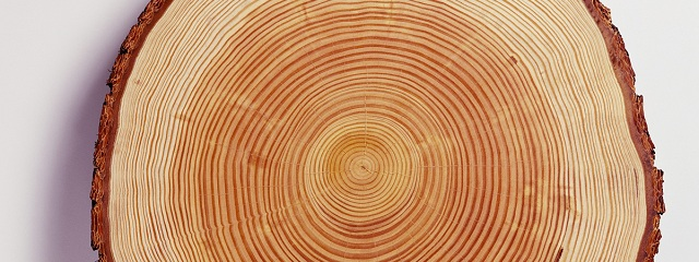 Древесина лиственницы. Основные характеристики