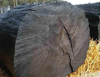 Мореная древесина дуба