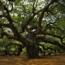 Основные свойства и характеристики древесины дуба